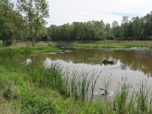 The beautiful wetlands, finally completed.