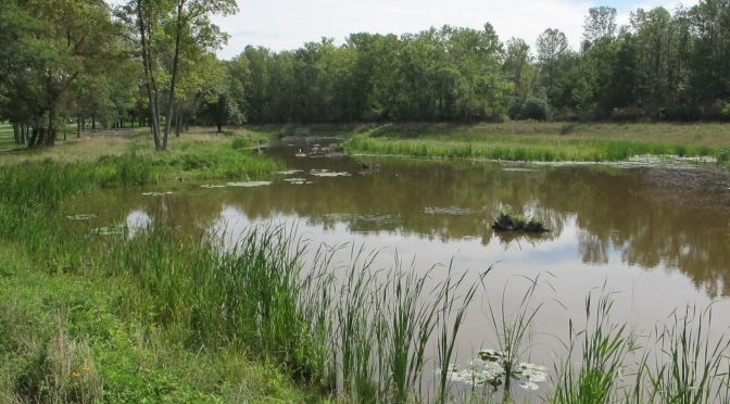 Wetland Mitigation at Evangola State Park