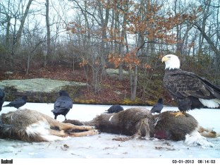 Camera trap at Taconic Outdoor Education Center, Fahnstock State Park