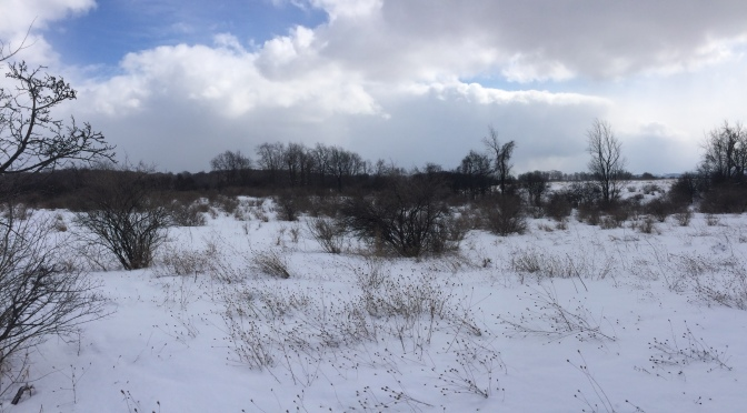 Grassland Conservation at Green Lakes State Park