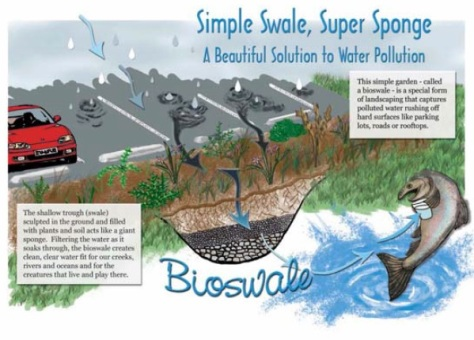 Bioswales are landscape elements designed to filter silt and pollution from surface runoff water.