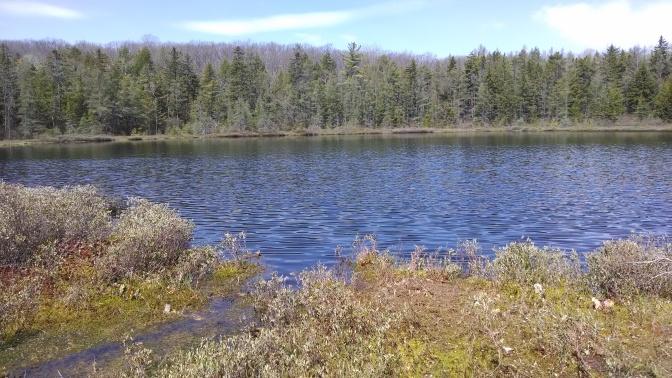 Protecting Mud Lake