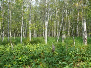 Swamp_South_of_Purgatory_Road_Aug08_2