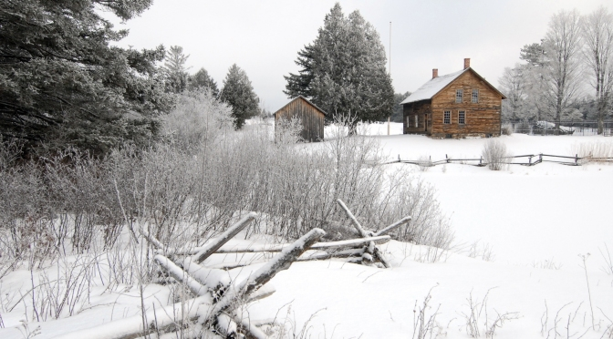 Winter Tree Identification Part I: Deciduous Trees