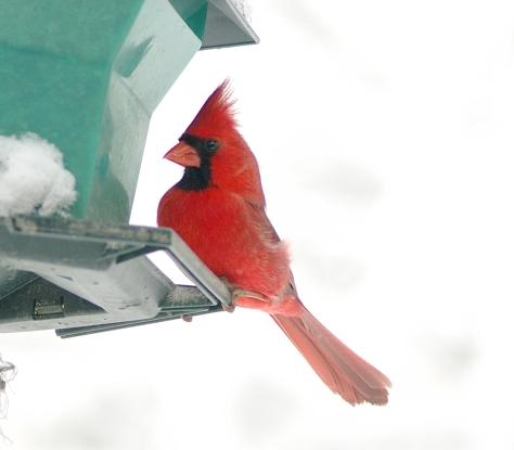 Cardinal close 3-5-05 - 0039