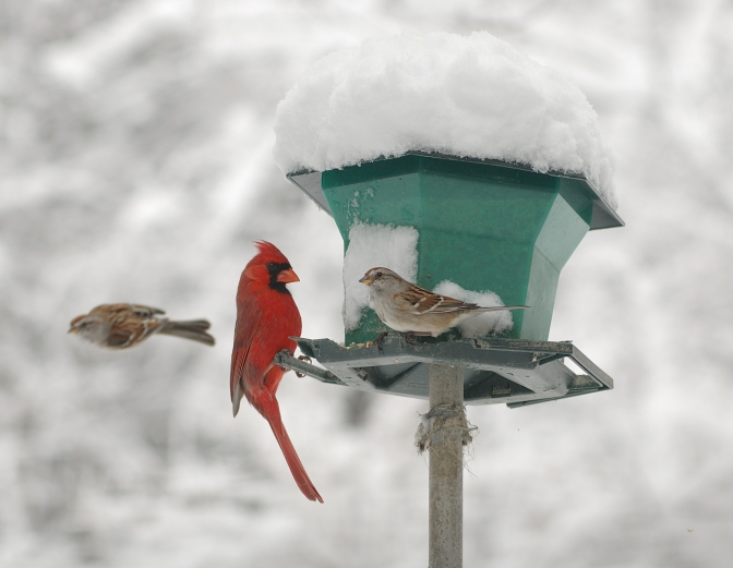 Snow Birds: New York's Winter Bird Population
