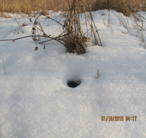 Entrance hole in the snow.