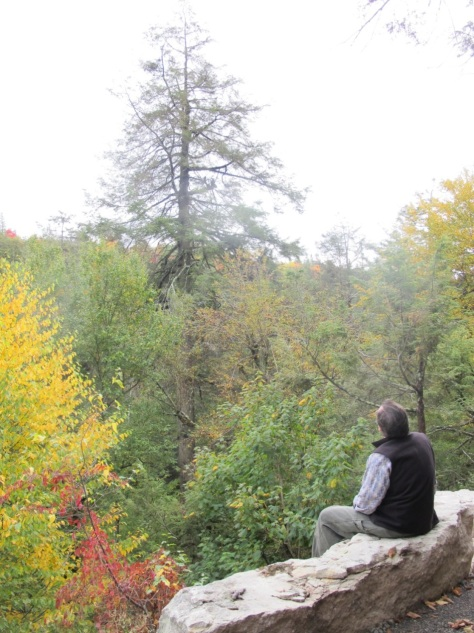 Mark Whitmore, of Cornell University, gazing at a hemlock in serious decline at Minnewaska State Park Preserve.