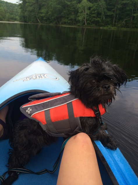 Dog in Kayak with life vest_Lilly Schelling