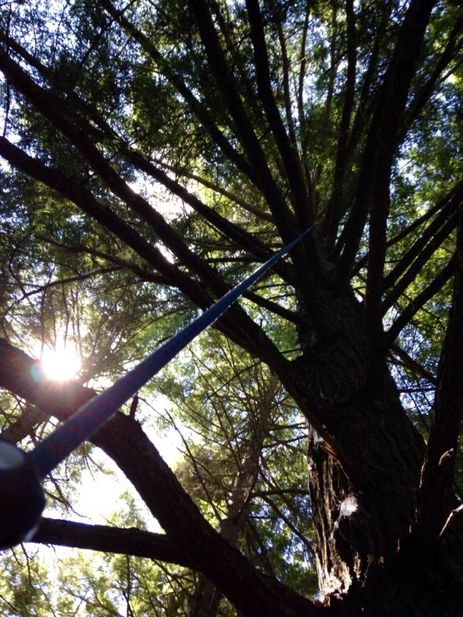 Forest Health Specialists: Climbing in Pursuit of Invasive Insects