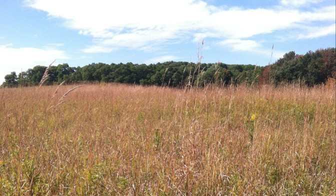 See Through the Eyes of the Seneca at the Ganondagan Grassland Management Area
