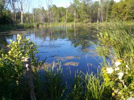 Lower pond site at Point au Roche Park where all 4 turtle hoop traps are set. (Danielle Garneau)