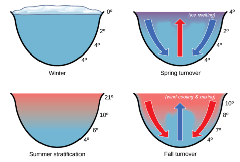adapted figure of dimictic temperatures