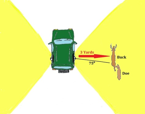 Deer Diagram