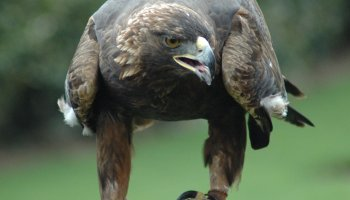 Raptor Migration And Hawk Watching New York State Parks Blog