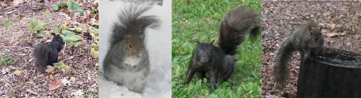Image_Many Squirrels