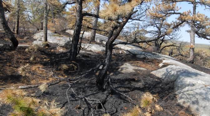 Fire Dependent Communities