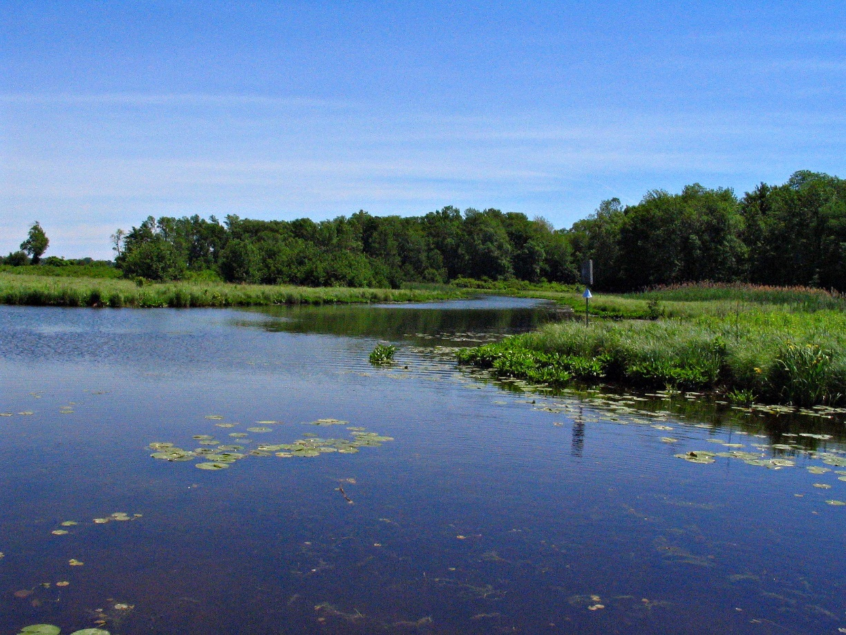 A prime example of managed Niagara River Wetlands, and a great opportunity for wildlife viewing, photo by Tina Spencer, State Parks