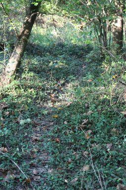 deer_path