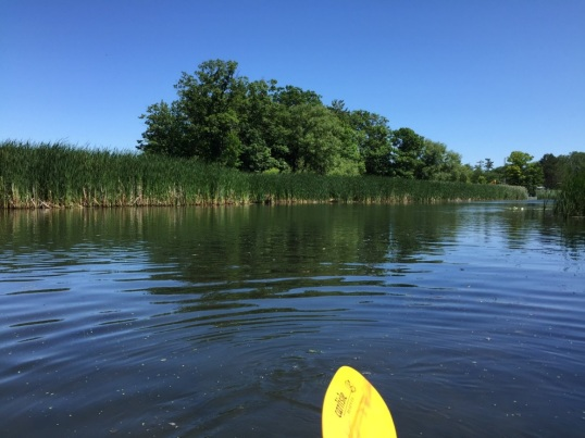Paddle from Tuscarora Bay past cattails into the marsh area, great for bird watching, photo by Tina Spencer, State Parks