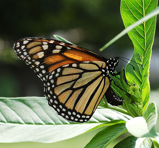 Tag Archives: Butterfly Garden