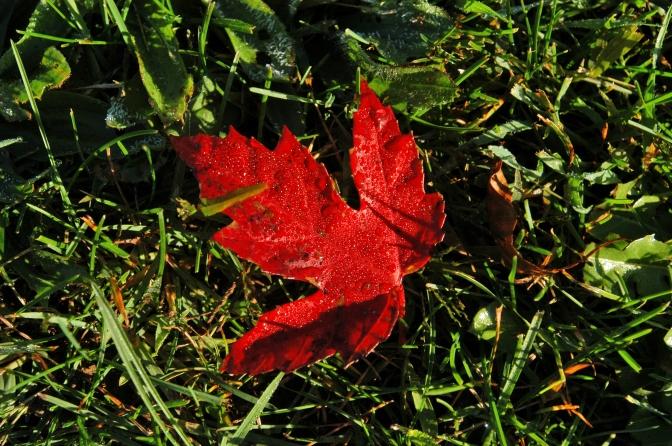 Oh Those Autumn Leaves