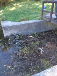 Beaver dam in a culvert at Grafton Lake State Park, photo by Lilly Schelling