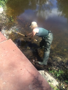 State Parks staff clearing a site for a pond-leveling device at Fahnestock State Park, photo by Lilly Schelling