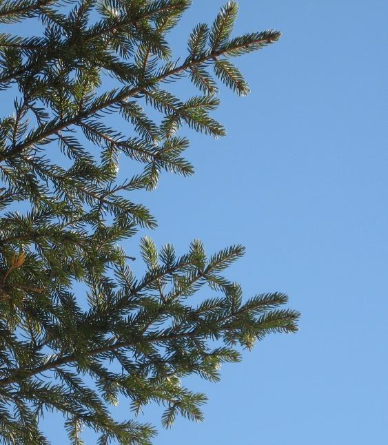 12-spruce-julielundgren-nynhp