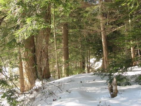 14-hemlocks-in-snow-julielundgrennynhp