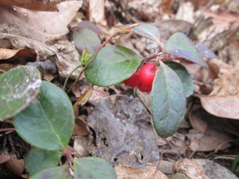 2-wintergreen-by-jubilee_fiest