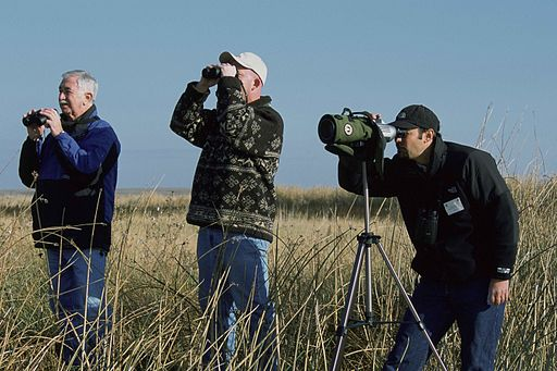 The Christmas Bird Count. And You Can Too!