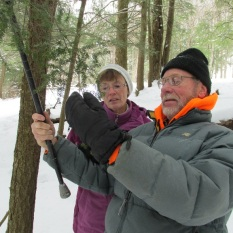 Volunteers at Allegany State Park employ an innovative technique to reach a hemlock branch and check for HWA. Photo by Alyssa Reid, State Parks