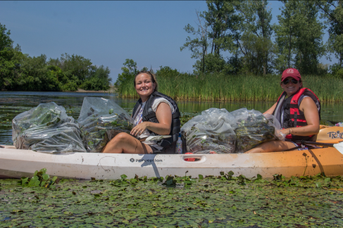 kelly-butterfield-sunset-bay-steward-and-holly-flanigan-fort-niagara-steward-pulling-invasive-water-chestnut-at-grindstone-marsh-in-selkirk-shores-state-park-matt-brincka-state-parks