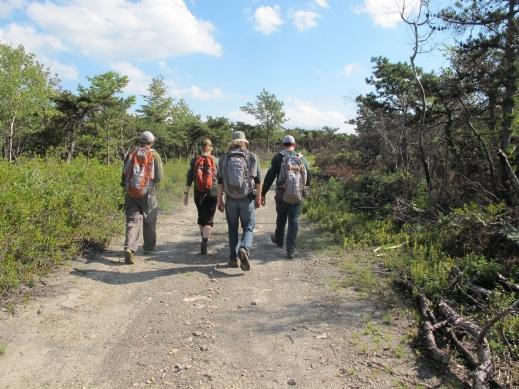 the-eastern-strike-team-performs-southern-pine-beetle-surveys-at-minnewaska-state-park-preserve-sara-travalio-state-parks