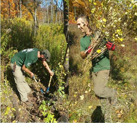 western-strike-team-members-phil-bossert-left-and-dallas-ortel-right-remove-honeysuckle-at-john-burroughs-memorial-field-state-historic-site-sarah-travalio-state-parks