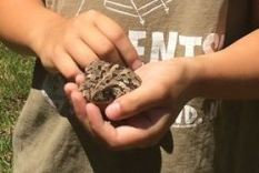 Kids are great at finding toads and frogs. Remember to let them go where you found them, photo by State Parks