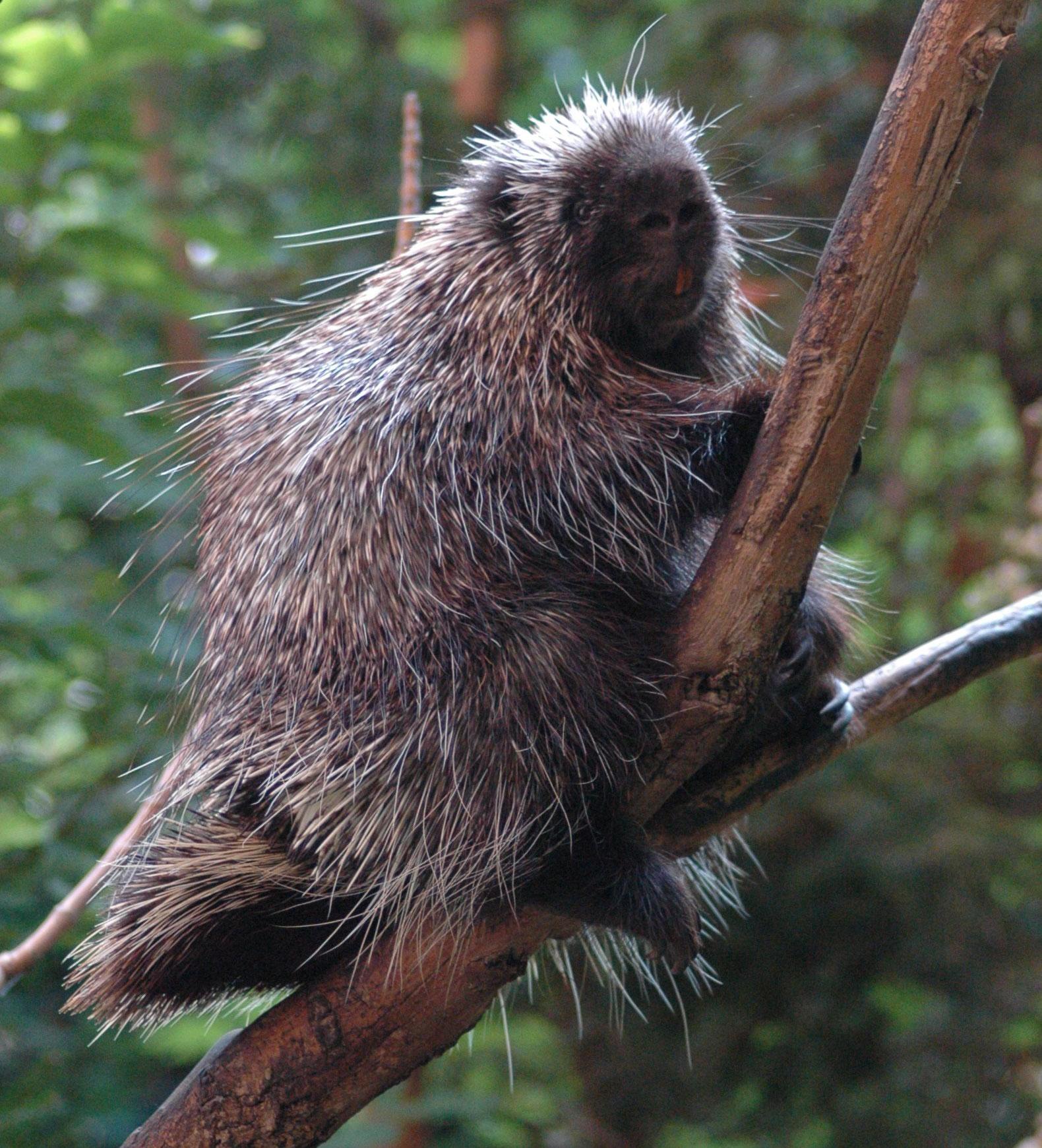 Porcupine-BioDome-2