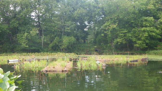 Floating Treatment Wetlands at Rockland Lake State Park