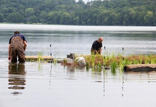 Constructing the floating wetland! Units are assembled near the shore, to be later brought to the target location., photo by State Parks.