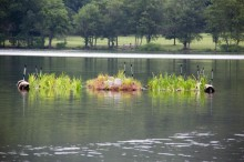One of several floating wetland units., photo by State Parks
