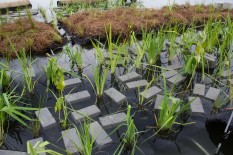 Close-up of a floating wetland unit. Brick weights help keep the plants evenly balanced, with roots below water, photo by State Parks.