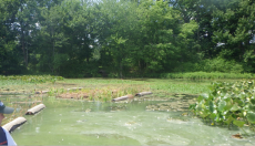 """Finished floating wetland, installed at Parking Field 5 culvert. The green """"spilled paint"""" look on the water is a harmful algal bloom. Photo from early August 2017, photo by State Parks."""
