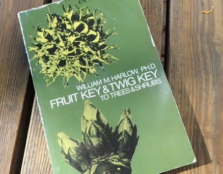 Fruit Key and Twig Key book_photo by Julie Lundgren