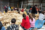 More than 50 people helped during the husking bee, photo by Carol Llewellyn.