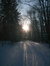 Late afternoon along the ski trail at Allegany State Park.