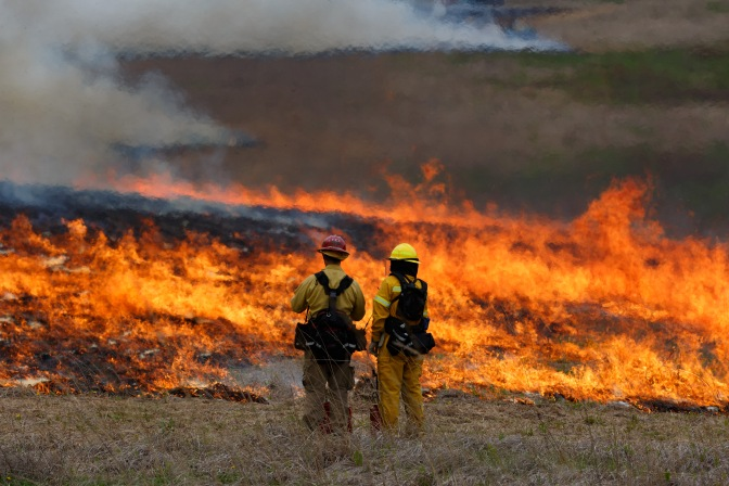 Fire Improves Bird Habitat at Ganondagan State Historic Site