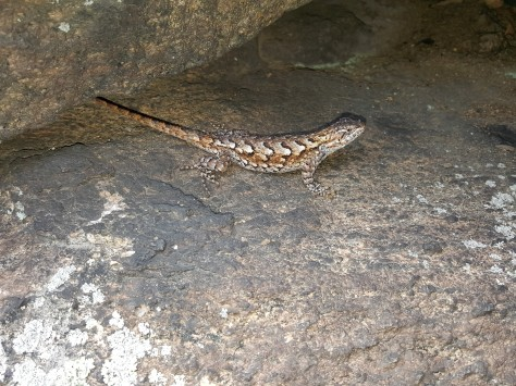 reptile | New York State Parks Blog
