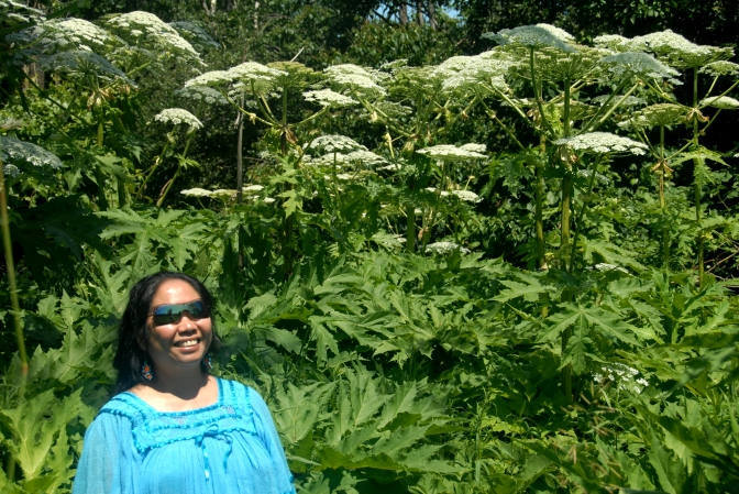 Invasive Species Spotlight – Giant Hogweed