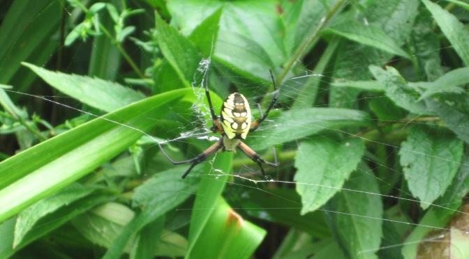 A Spider Sampler